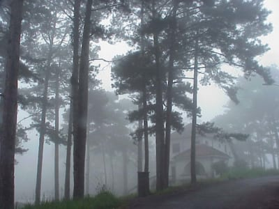 Đà Lạt Xứ sở ngàn thông và sương mờ
