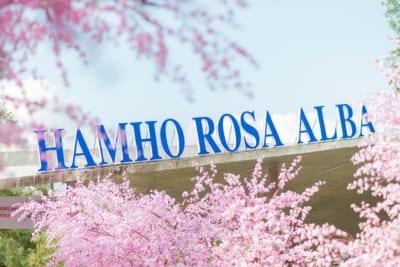 Hầm Hô Rosa Alba - Khu du lịch sinh thái dã ngoại gắn với lịch sử Tây Sơn khởi nghĩa xưa